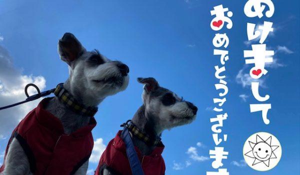 ヨガ 松山